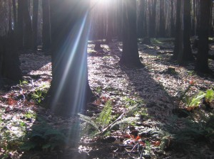 this image taken by Tali, in the Ash forests