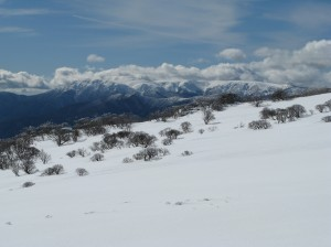 Mt Bogong, across the High Plains