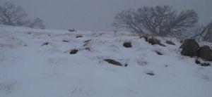 Stirling summit