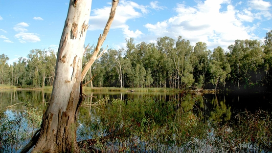 a new threat to the Red Gum National Parks | an ...
