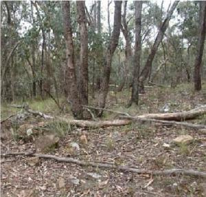 Heathy Dry Forest near Shepherds Flat